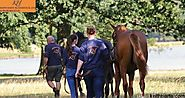 Sale Consignment of Beautiful Thoroughbred Horses