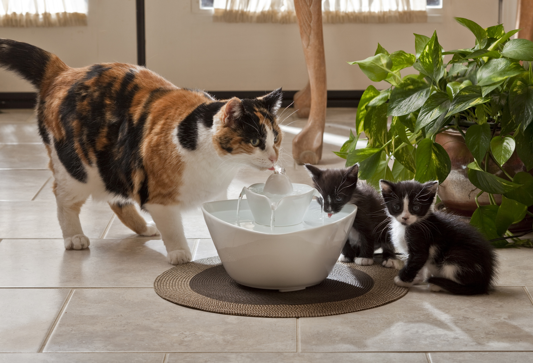Headline for Cat Water Fountain Reviews