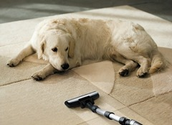 The vacuum cleaners that were top dogs in our pet hair tests