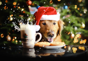 8 Holiday Recipes for Your Dog Too!