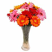 Multi Colorful Gerberas Arranged in Glass Vase