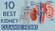 10 Best Kidney Cleanse Herbs, Pass Stone without Surgery