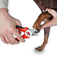 What's the Best Way to Maintain Your Dog's Nails?