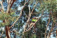 Tree Removal Mount Waverley