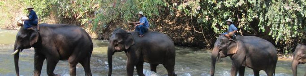 Headline for 5 Places in Chiang Mai not to be Missed - Parks, Temples, and Rivers in Chiang Mai