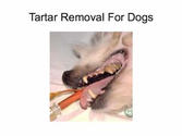 Tartar Removal For Dogs
