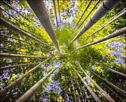 Best of Bamboo: Bamboo Projects for Your Home and Garden