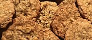 Coconut Butterscotch Oatmeal Cookies | The Homesteader's Free Library