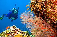 Wanna Scuba Dive, Know where in India