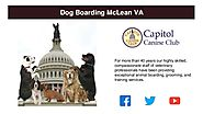 Best Dog Boarding McLean VA