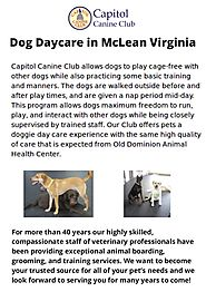 Best Dog Daycare in McLean Virginia