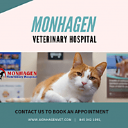#1 Animal Hospital Middletown | Monhagen | Visual.ly