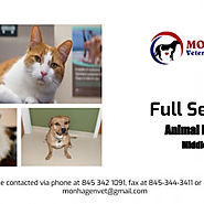 Top Rated Animal Hospital In Middletown | Visual.ly