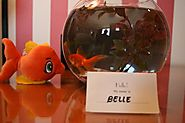 Kimpton makes guests happy with Guppy Love