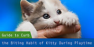 A Step-by-Step Guide to Curb the Biting Habit of my Kitty during Playtime – CanadaVetExpress – Pet Care Tips