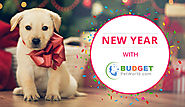 Won't You Celebrate Your New Year With Budget Pet World | BudgetPetWorld