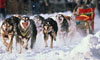 How the Iditarod Works