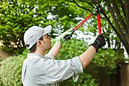 Best Tree Trimming Services - Leatherfacetreeservice