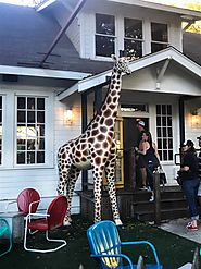 These people trying to find the answers to life from this big giraffe