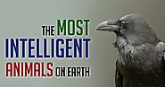 To𝗉 5 Most 𝗶ntell𝗶gent An𝗶mals On Earth | TheTop5