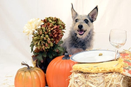 Pumpkin Pie Pet Treats