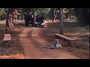 """Maya"" sighting in tadoba : Book resort in Tadoba for Wildlife safari."