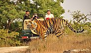 Pench Tiger Reserve Online Booking | Online Jugle Safari Booking