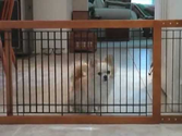Freestanding Pet Gates - Step Over or Tall