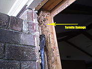 What is a Timber Pest Inspection? - Landmark Inspections