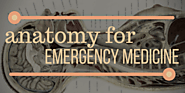 Anatomy – Emergency Medicine Ireland