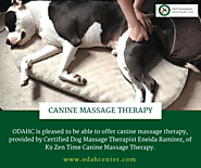 Affordable Pet Vet in McLean - Canine Massage Therapy