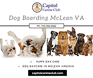Dog Boarding McLean VA | Capitol Canine Club