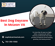 Best Dog Daycare and Boarding in McLean,VA