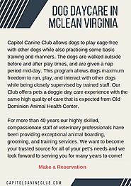 Dog Daycare in McLean, Virginia