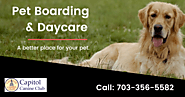 Best Pet Boarding & Daycare Services McLean VA