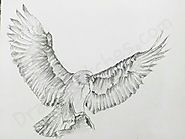 How to Draw an Eagle: In A Few Easy Steps with Pictures