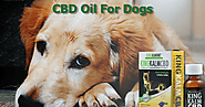 CBD For Your Dog - A Complete Guidelines