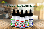 Numerous Benefits of CBD Terpenes