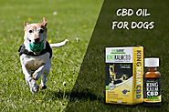 Find The Best Way To Choose CBD For Your Dogs