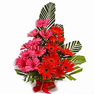 Buy/Send Basket Arrangement of Pink and Orange Gerberas - YuvaFlowers