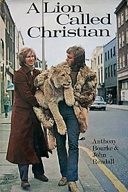 Christian the Lion - Home | Facebook
