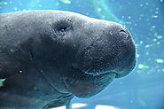 LOVE THOSE MANATEES!! Check out one of these festivals for a nice day trip!