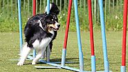 It's a Promise you can Shape your Dog's Behaviour with These Training Tips