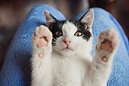 Pay Attention! You are Taking Care of your Cat in A Wrong Way - Pet Blog