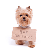 How to Get Dog Insurance – Reasonably Insuring Your Beloved Pet