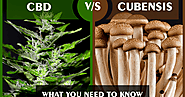 Difference Between CBD And Cubensis