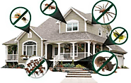 6 Best Ways to Pest Proof Your Home without any Cost