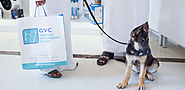 Pet health care plans in Abu Dhabi - Best pet care center | germanvet.ae