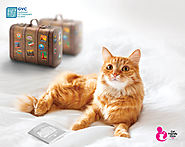 Pet Transportation Services in Abu Dhabi - Moving My Pet | germanvet.ae