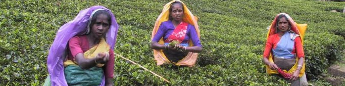 Headline for Types of Tea you Should Know - The Many Variations of Ceylon Tea